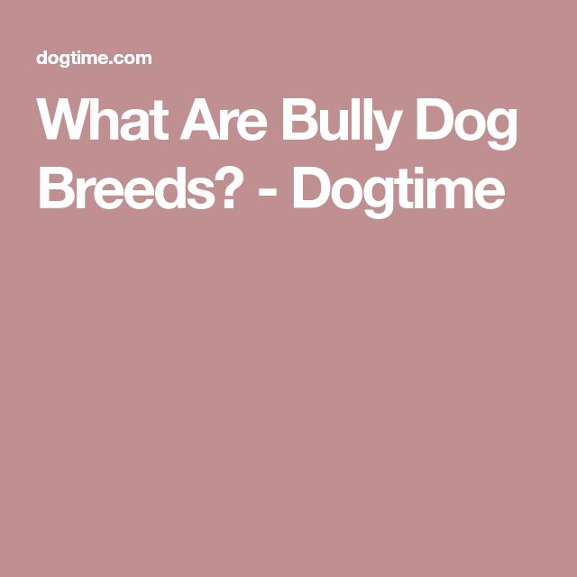What Are Bully Dog Breeds? - Dogtime