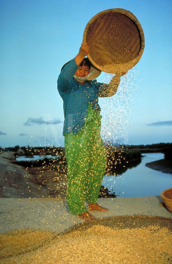 Good Morning Vietnam Palmerston North : Best images about love vietnam on pinterest