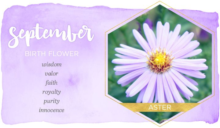 As the September birth flower, asters are known to symbolize wisdom, valor and faith. Different aster colors can also carry different meanings:      Purple asters symbolize wisdom and royalty. Historically within European civilizations, members of the royal family wore purple to signify their nobility. Purple asters are the most popular color.     White asters symbolize purity and innocence, as well as new beginnings.     Red and pink asters symbolize undying devotion.