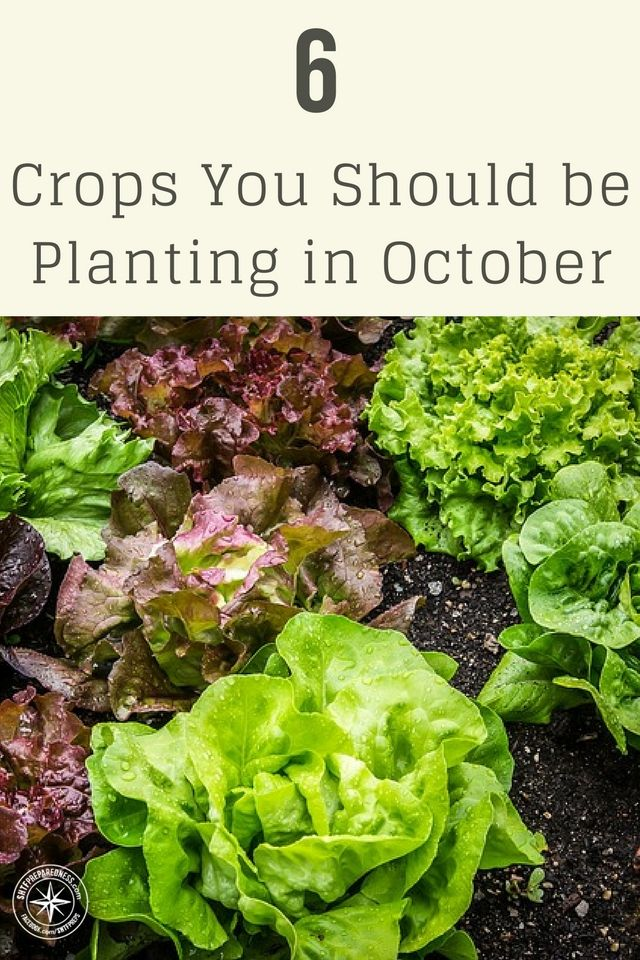 6 Crops You Should Be Planting In October Keep Mind That Anything Plant Is Being Planted For Over Wintering