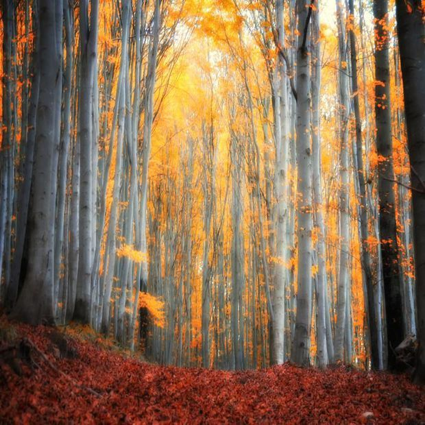 Photo - bleu, hiver, bosquet, ciel, -, fond, bouleau, russe