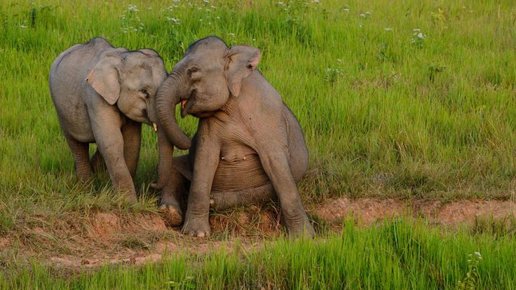 This is why we no longer ride elephants | Intrepid Travel Blog