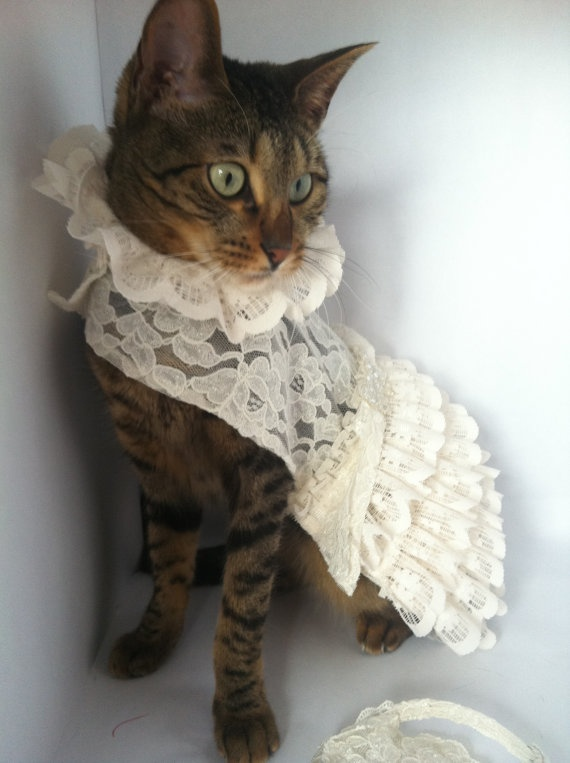 Best 25 cat wedding ideas on pinterest risky pictures weddings cat wedding dress with veil by by fiercepetfashion on etsy 6560 junglespirit Choice Image