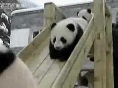 I have got to see baby pandas on a slide...