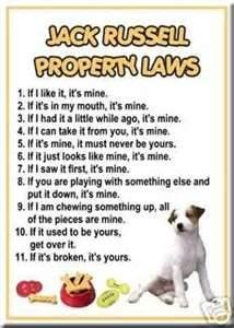 Tripp may not be a Jack Russell but these rules suit our little terror terrier!  I've put this in my food cuz we caught him eating hard plastic again... Three weeks after his first surgery and another trip to the vets for a check over! My gawd that boy'll be the death of me!
