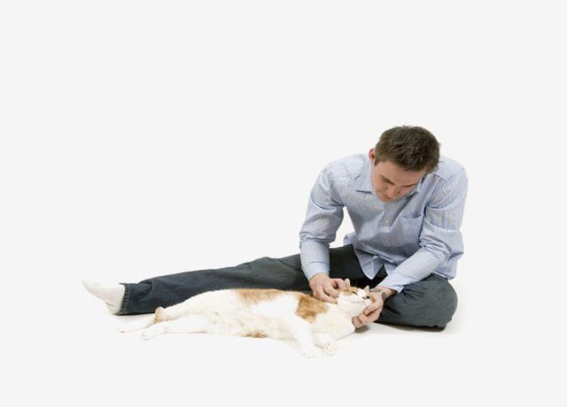 If you love your pets, then you would probably not compromise and will always…
