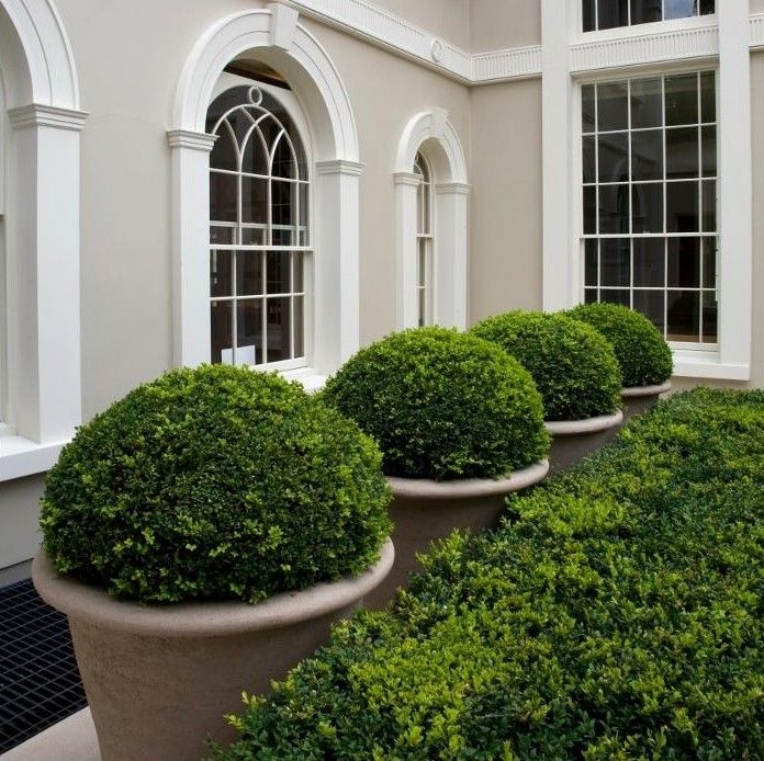 Box planters...we have awesome artificial boxwood balls and faux boxwood hedge panels..check out my boards! this is very nice!