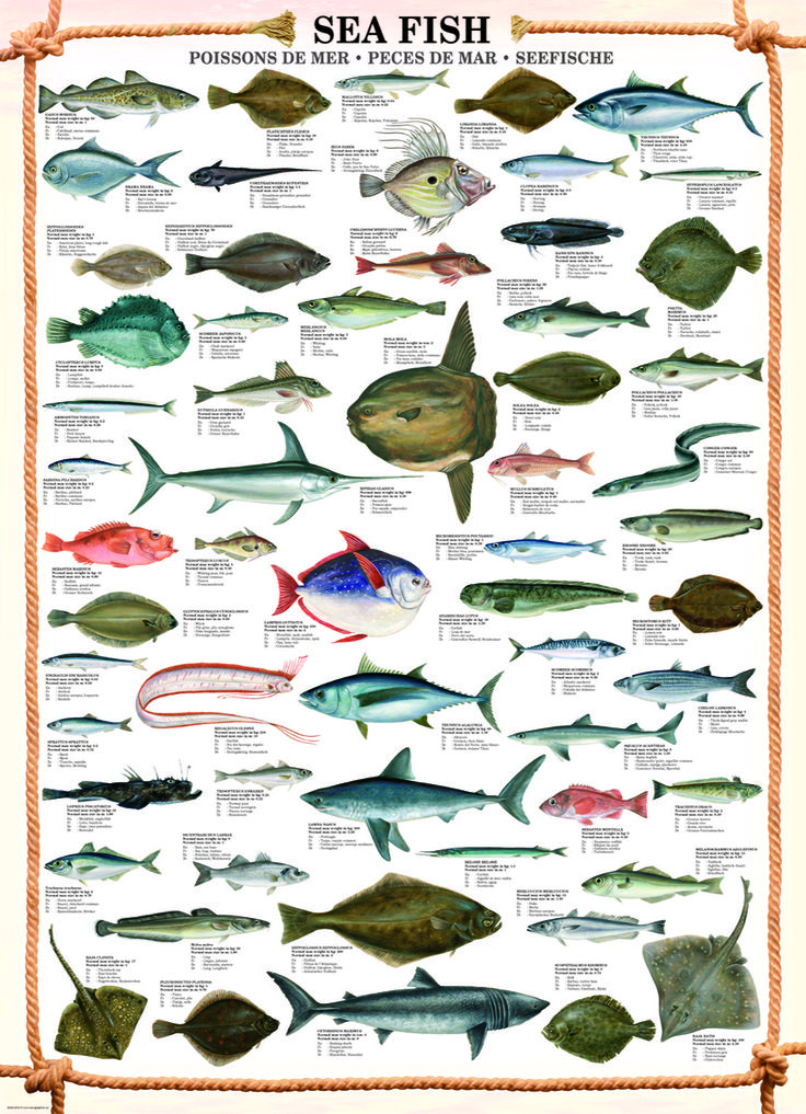 1000 images about animal charts on pinterest for Fish weight by length chart