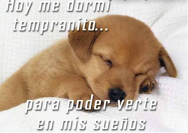 Imagenes Con Frases Divertidas Sobre Perros Y Gatos Tiernas Y