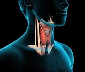 Very effective cure for Thyroid