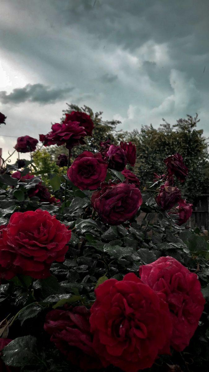 Pin By Mohammad Assem محمد عاصم On Rose Hair Braid Videos Art Wallpaper Flowers