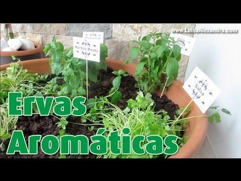 Luisa Alexandra: Ervas Aromáticas • Como fazer uma Mini Horta com Ervas Aromáticas • VÍDEO