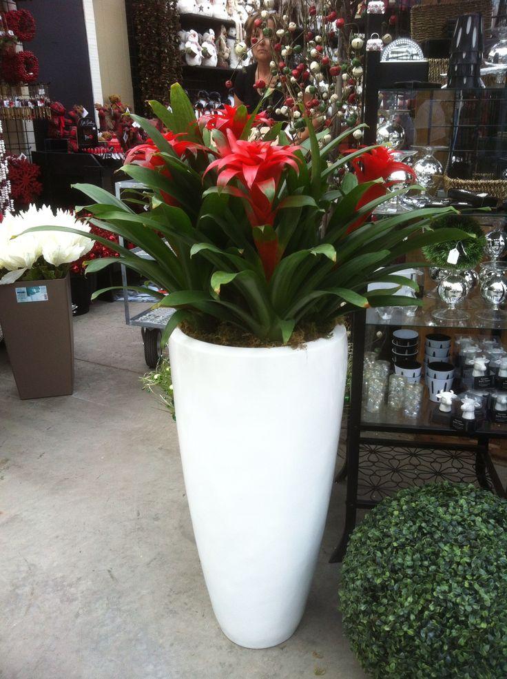 Bromeliad planter.