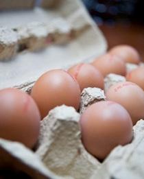 EIEREN - Als je een ei bij het ontbijt neemt, geeft je dit langer een vol gevoel. Uit onderzoek is gebleken dat vrouwen met overgewicht die een ei als ontbijt namen, twee keer zoveel gewicht verloren als andere vrouwen. En wat betreft cholesterol: ei-eters hebben niet een hoger of lager cholesterol.