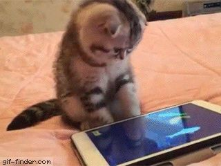 Nice try, kitty | Gif Finder – Find and Share funny animated gifs