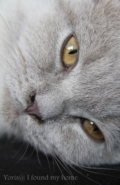 """""""Cats pride themselves on their ability to do nothing."""" --John R F Breen"""