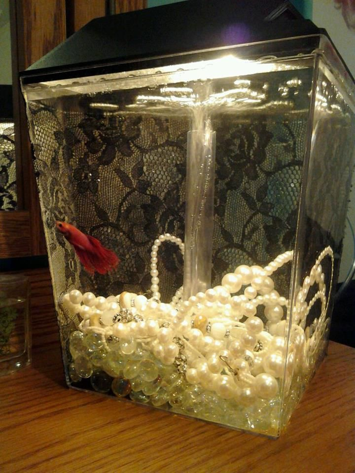 1000 ideas about fish tank themes on pinterest for How to make ice in a fish tank
