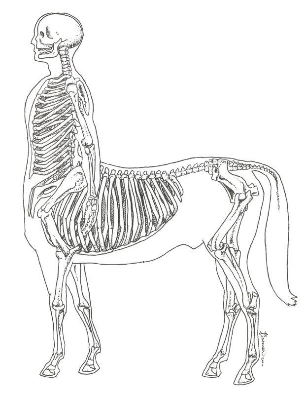 160 best Dryads and Kentauros images on Pinterest | Centaur, Greek ...