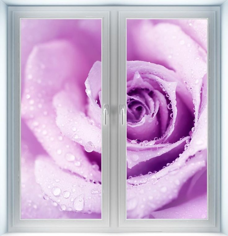 Majestic Wall Art - Wet Purple Rose Instant Window, $44.00 (http://www.majesticwallart.com/instant-windows/wet-purple-rose-instant-window)