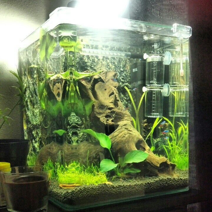 The Office Fresh Water Planted Tank Day 3 Affordable Ways