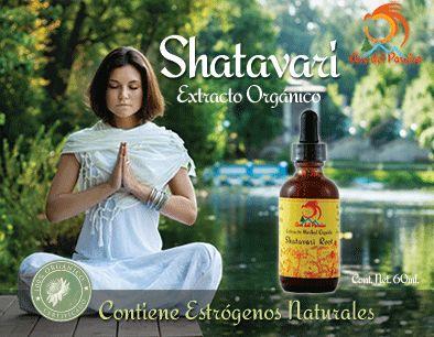 Shatavari es una de las raices mas preciadas por su efectorejuvenecedorsobre las celulas. Nutre y limpia la sangre y los órganos reproductivos de la mujer. Contiene una gran cantidad de estrógenos naturales, haciéndolo imprescindible para fortalecer elsistema reproductivo femenino, equilibrando la secreción hormonal. Se recomienda para aumentar la fertilidad y la lactancia, regular el equilibrio hormonal femenino, tratar los síntomas de la menopausia y como afrodisíaco.