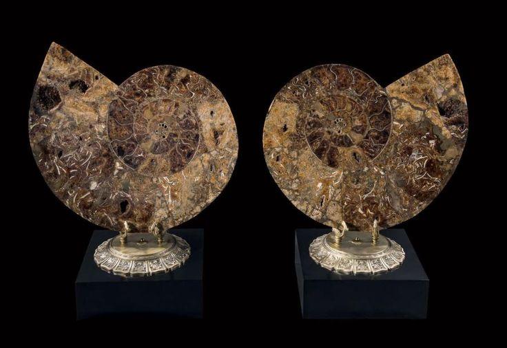 Ammonite Pachydiscus Crétacé Madagascar Paire de grande taille Soclées sur une monture en métal doré surmontant une base en bois noirci Dim. des ammonites 81 x 66 cm - Binoche et Giquello - 07/03/2017