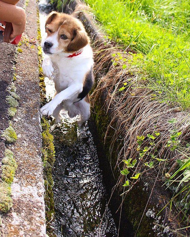 . . なぜか今日は 犬の日らしいので🐾. . #犬の日 #愛犬 #犬 #いぬ #dog #柴犬 #キャバリアキングチャールズスパニエル #雑種 #過去pic #水遊び #散歩 #love #cute . . #ファインダー越しの私の世界 #写真好きな人と繋がりたい #一眼レフ #Canon #EOSKissX7 #カメラ部 #カメラ女子 #カメラ好きな人と繋がりたい #写真がすき #photo #pic #camera #pt_life_