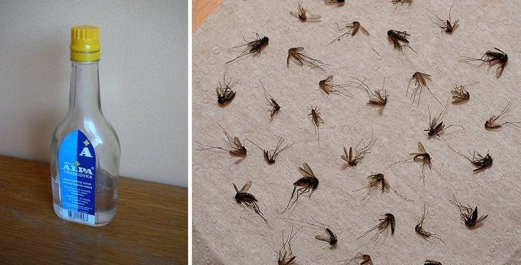 Leto je síce jedno z najkrajších období v roku, no znepríjemniť nám ho môžu práve otravné komáre. Keď už nás uštipnú, natierame sa chladivým gélom z lekárne alebo si na to dáme našu slovenskú tradičnú Alpu. Alpu pozná každý a skoro každý ju má aj doma. Dnes si prezradíme receptproti komárom a kliešťom, na ktorý …