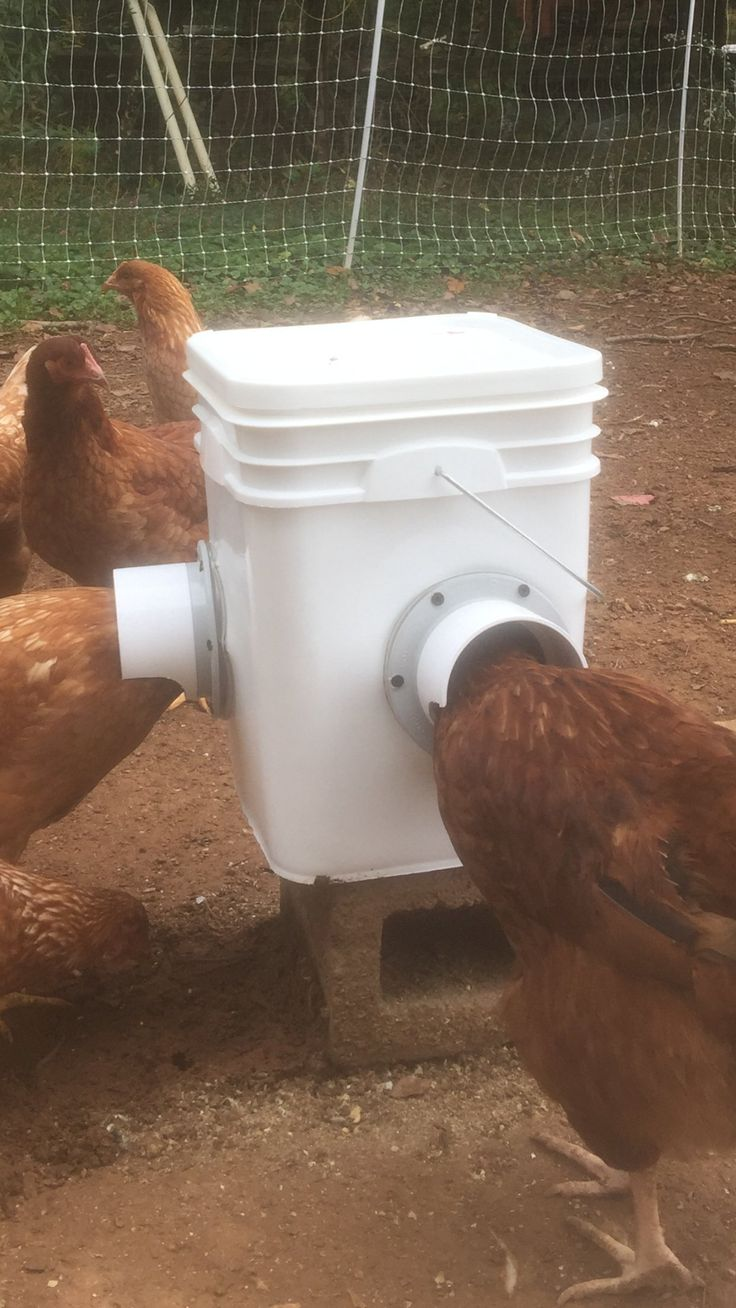 Amazon.com: Chicken Feeder-Holds 20 Pounds-Pellets-Crumbles-Grain in Bucket - For 21st Century Chicken Owners - Inside or Outside of Coop - Use With Nipple Waterer (2 Feed Ports -Corner Placement (4-6 Hens)): Pet Supplies