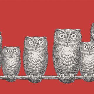 Cole & Son Fornasetti II -malliston Nottambule-tapetin suurisilmäiset pöllöt. Vaakatasoon sijoitettavan tapetin korkeus on 40cm, pituus 10m. Viisi värivaihtoehtoa, kuvassa 97/5018. Mallistoa myyvät valikoidut Värisilmä-liikket  ympäri Suomen, katso liikkeet sivulta www.varisilma.fi