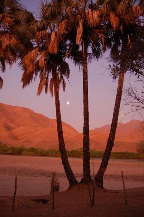 Moon Risings