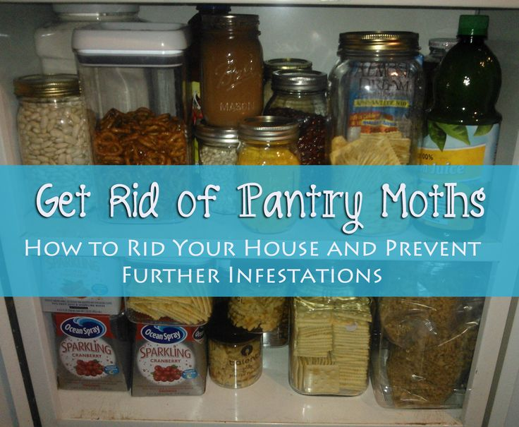Bugs invaded your food supply? Get rid of pantry moths for good and prevent future infestations with this proven method. Save your food and your money.