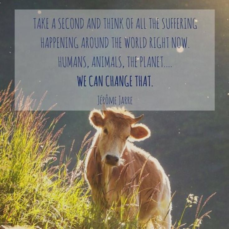 17 Best Images About I AM VEGAN. HEAR ME...Cuddle All The