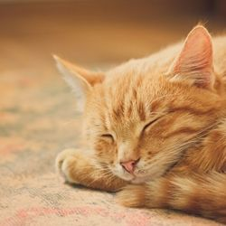 Tips for keeping kittens flea-free. You can use VO5 shampoo (the normal, orange kind). Lather up very well and let sit for a few minutes before rinsing. It kills fleas and is safe for kittens (and puppies)