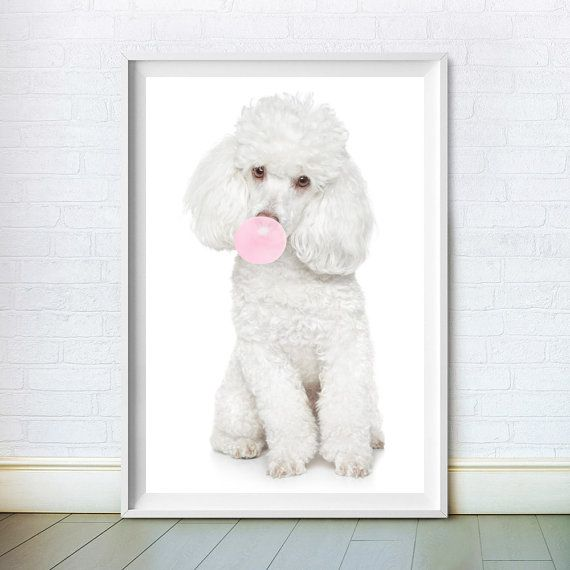 White Poodle Wall Art Print Baby by ChoosyArtDownload. Instant animal nursery art available in a range of sizes.