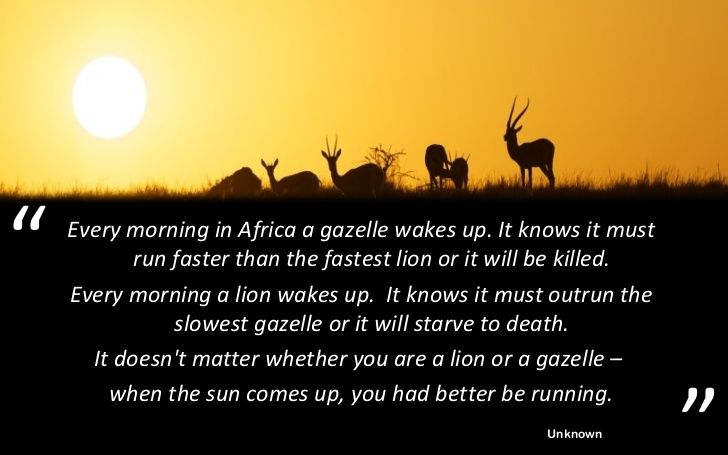 Pix For > Lion And Gazelle Proverb | African Proverbs ...