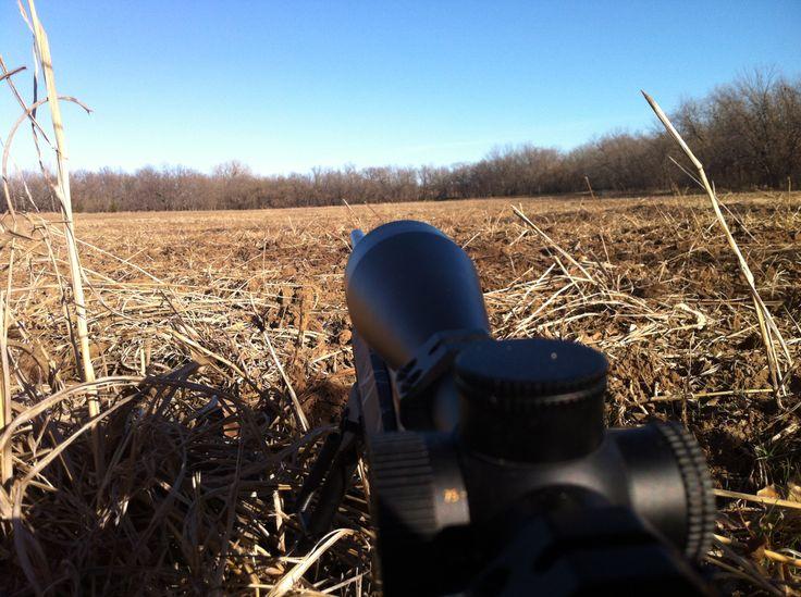 Waiting on 'Mr. Right'.  Kansas Deer Hunting December 2012