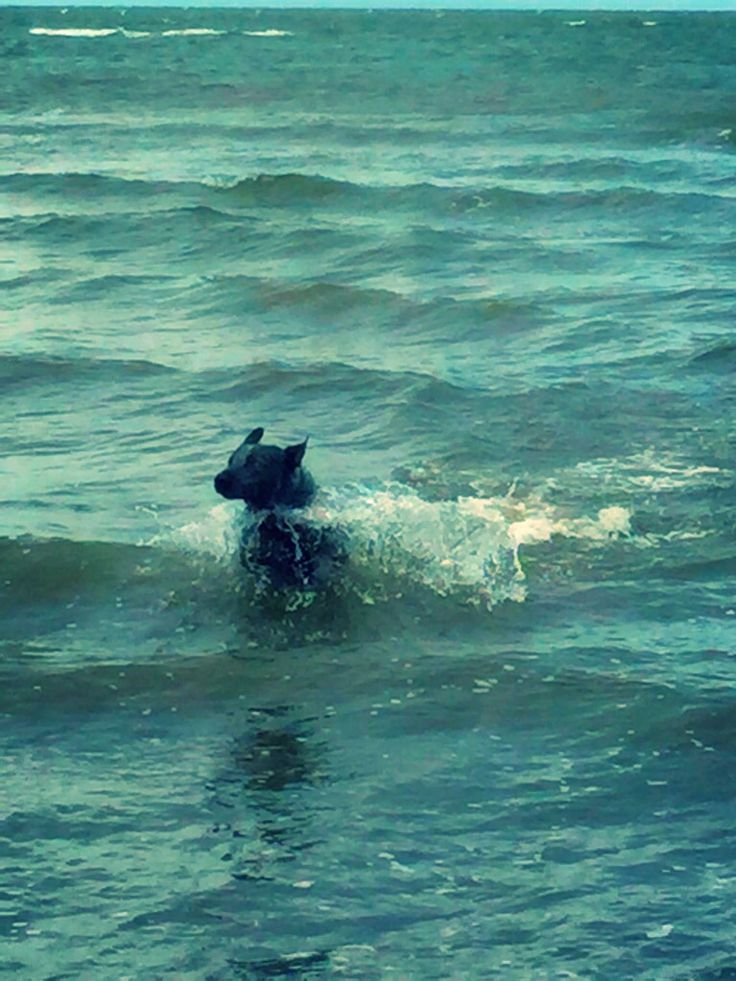 Rockys first trip to the beach. He loved it.