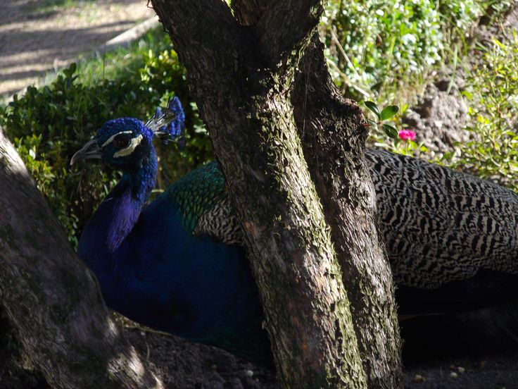 Look who we found in the palace's gardens.