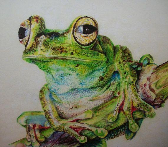 Rana  disegno su carta  rana con le matite di Stellangelo su Etsy