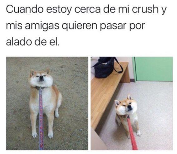 no tengo crush :v