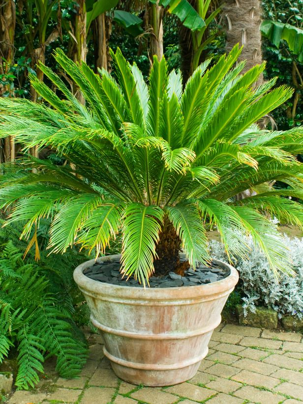 Nice Tropical Plants Can Thrive On A Sunny Summer Patio