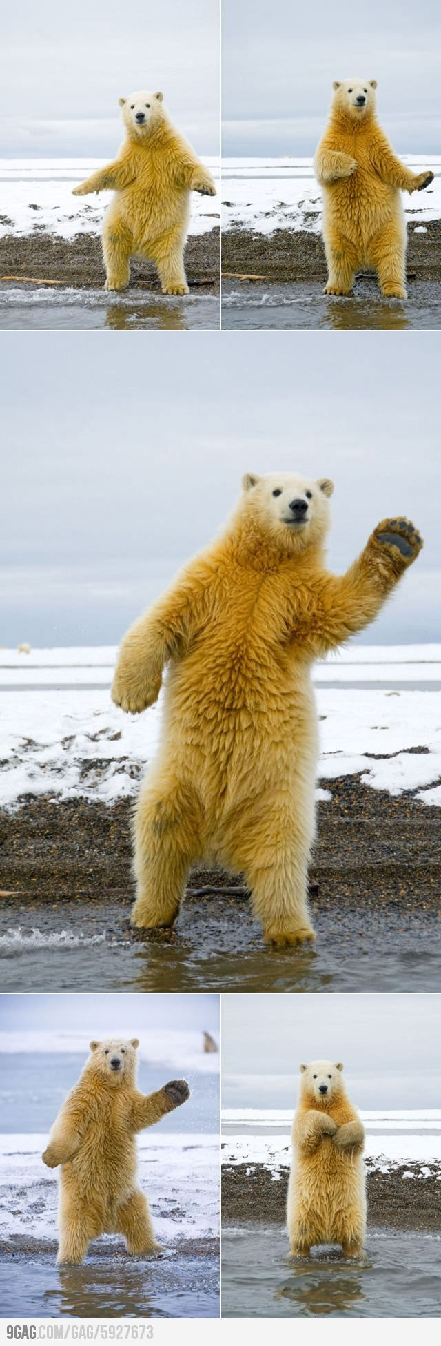 the polar bear dance.
