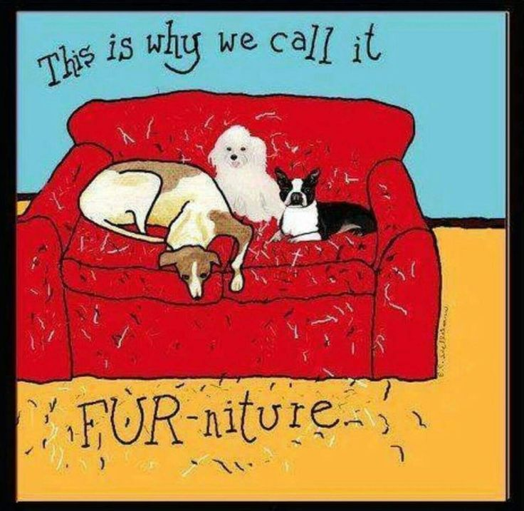 This is why we call it FUR-niture . . .