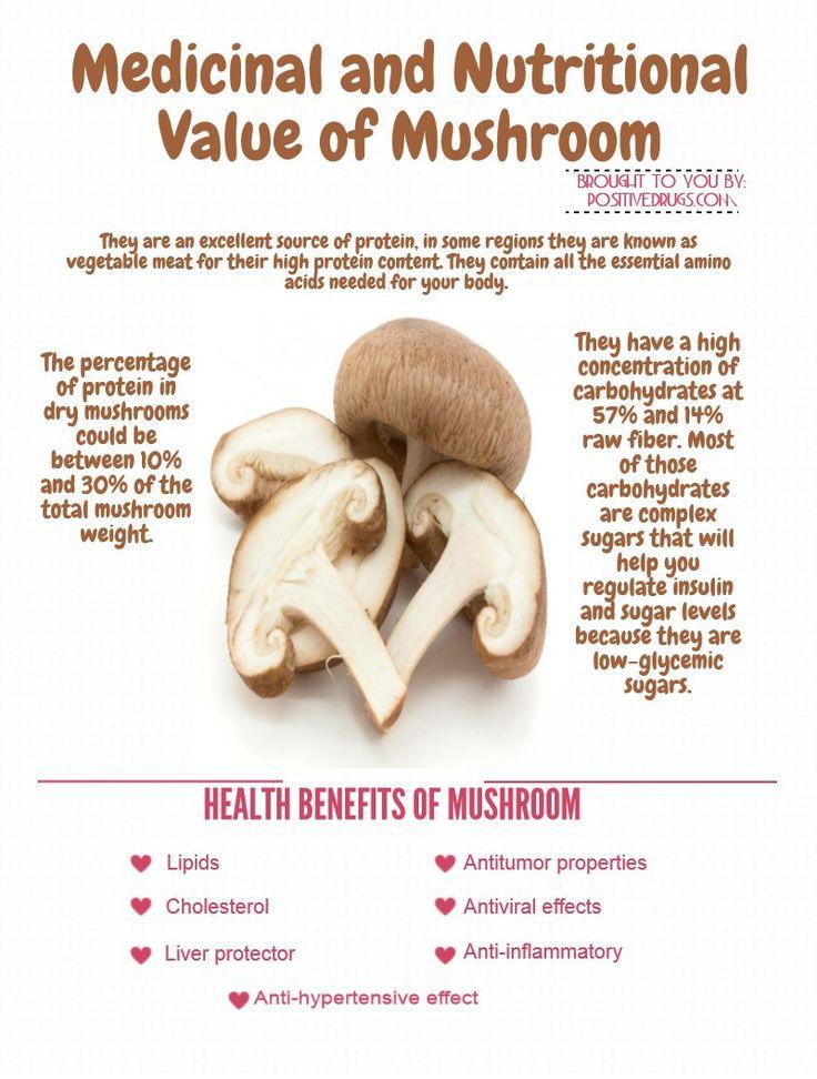 Medicinal and Nutritional Value of Mushroom - positiveDrugs