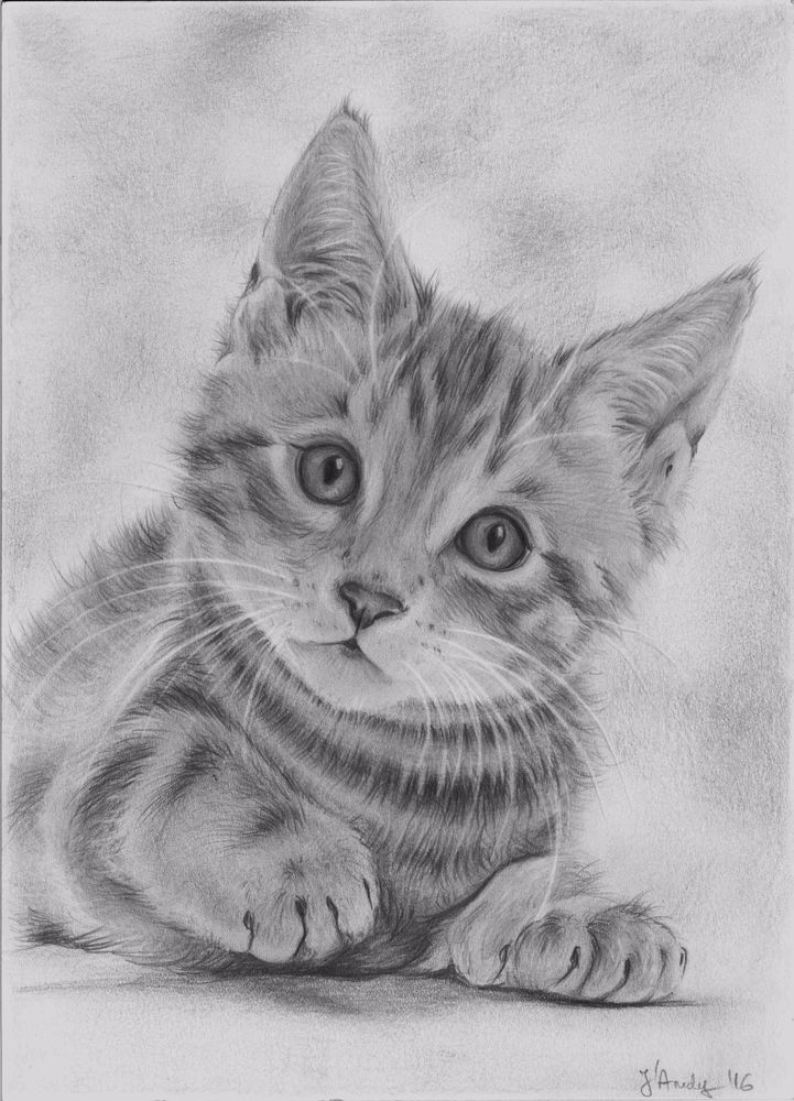 Custom original cat drawing portrait from your photo A4 #Realism