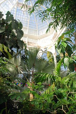The weather is fantastic in SF this week--a great time to visit Golden Gate Park! Be sure to see the Conservatory of Flowers while you're there.