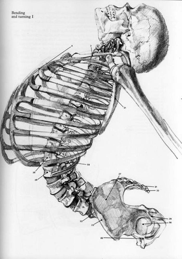 ossos, coluna, ioga...