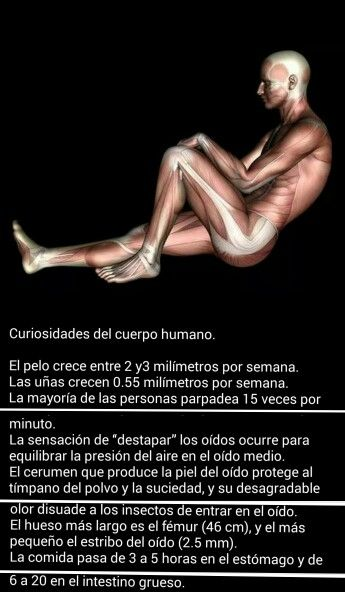 17 best images about el cuerpo humano on pinterest for Interior del cuerpo humano