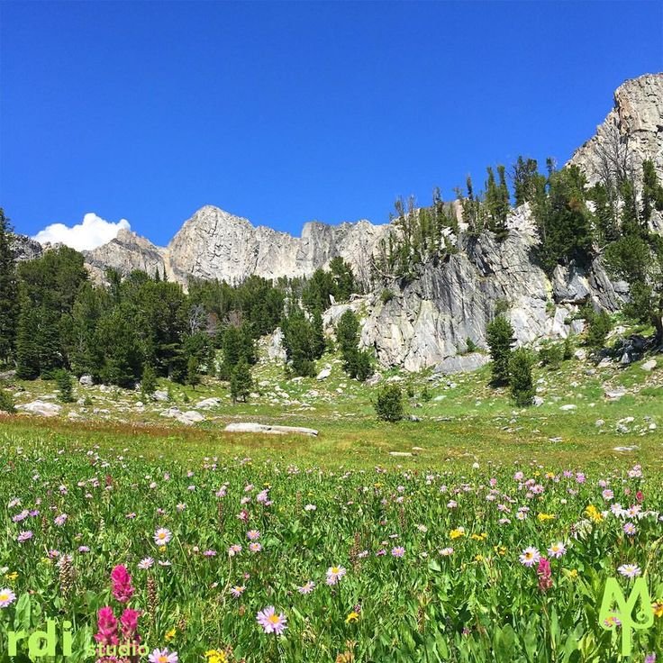 Hike into Beehive Basin and the Spanish Peaks the last week of July and you will see the wild flowers at their best. Big Sky, Montana
